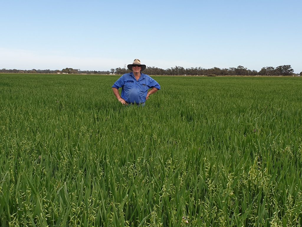spud lumbar in his crop