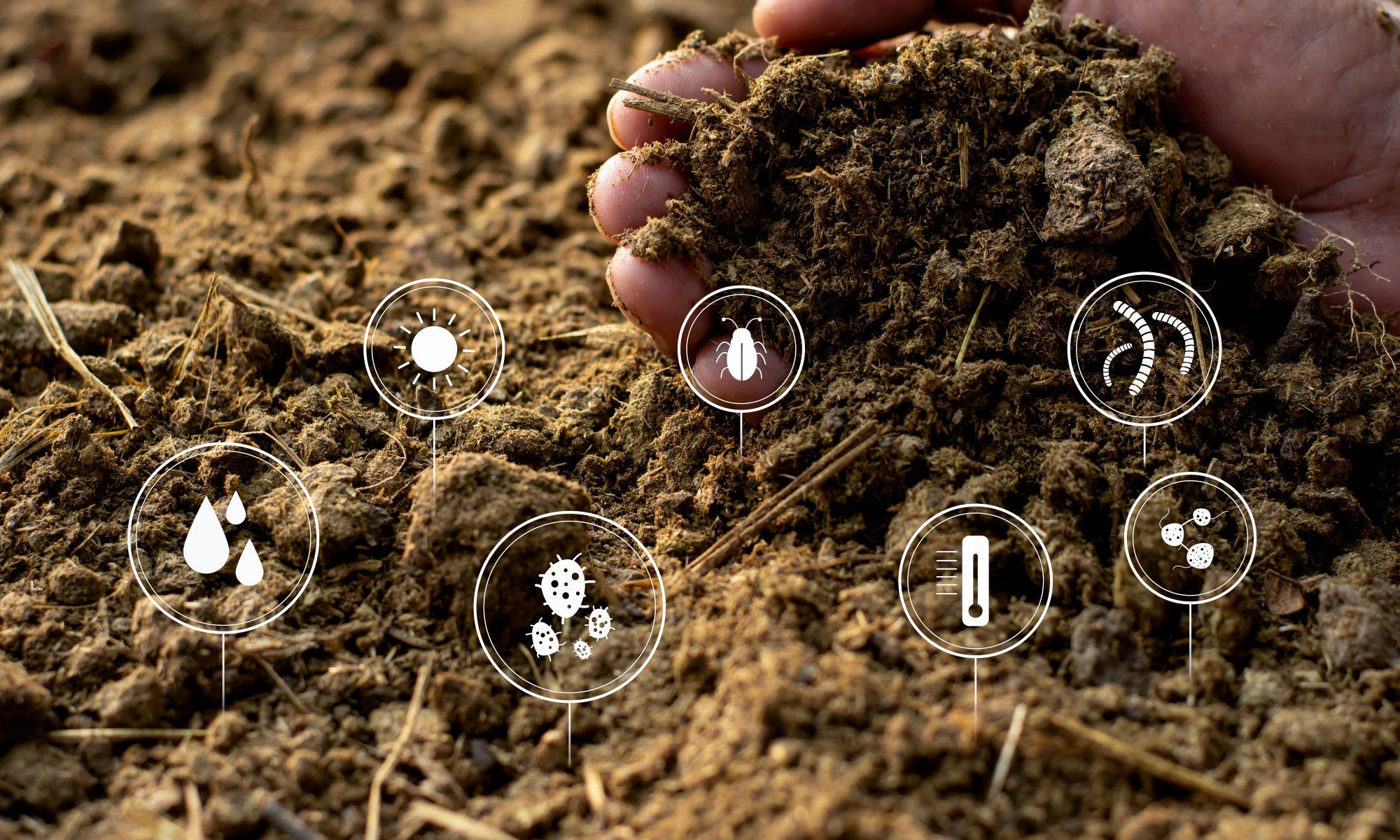 healthy soil ingredients